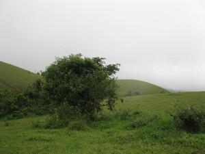 Hills in Vagamon